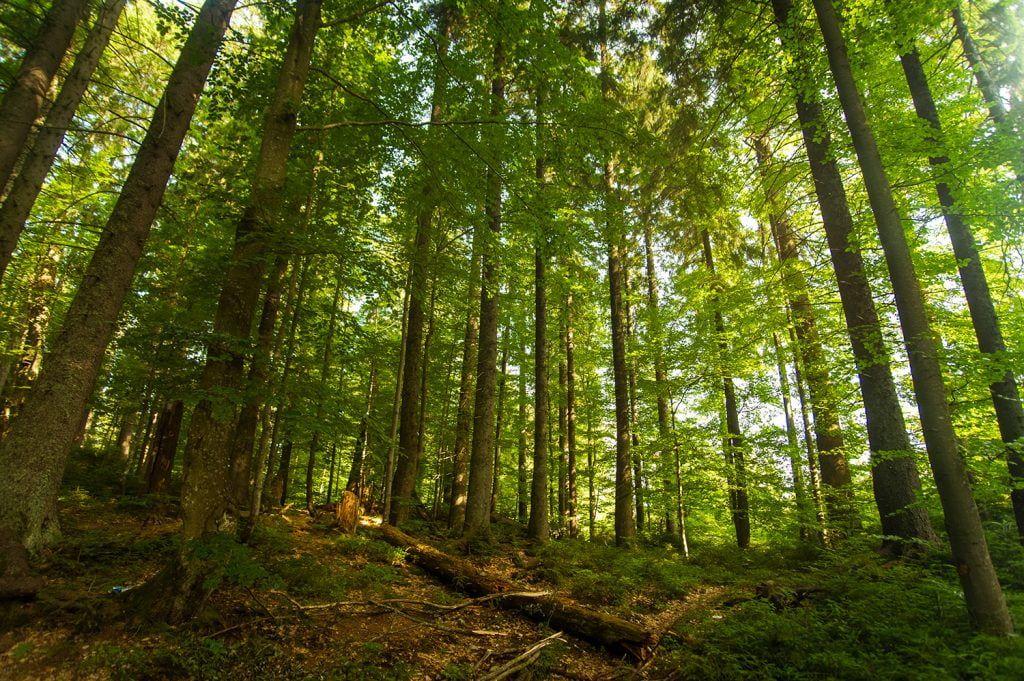 Energía de biomasa natural
